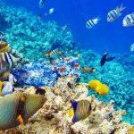récifs-coralliens-poisson-t